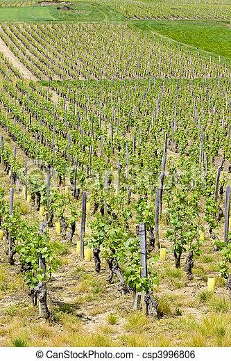 vineyards of Cte Maconnais, Burgundy - csp3996806