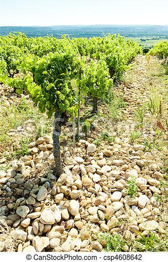 vineyards, Provence, France - csp4608642