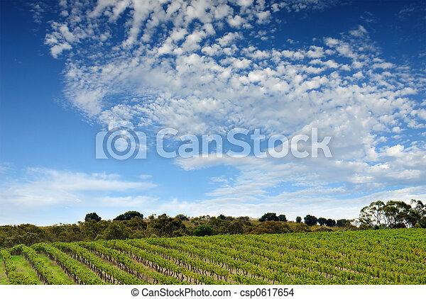 vinhedo, australiano, paisagem - csp0617654