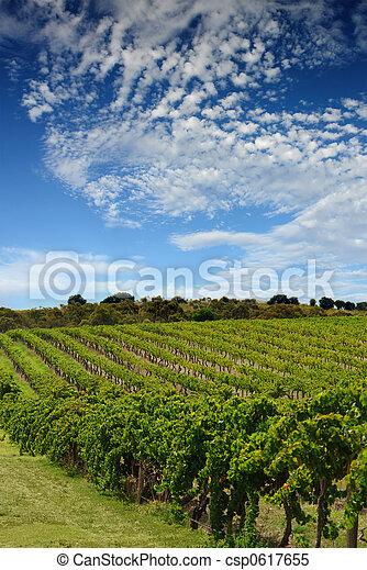 vinhedo, australiano, paisagem - csp0617655