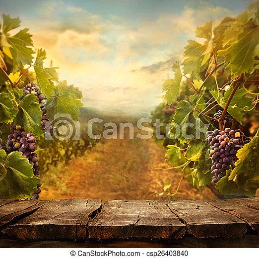 vinhedo, desenho - csp26403840
