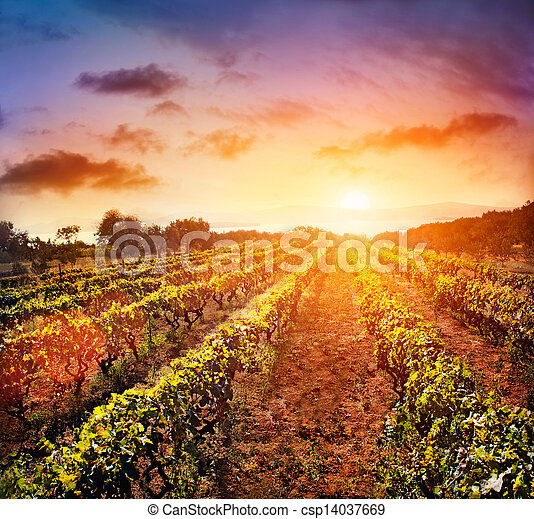 vinhedo, paisagem - csp14037669