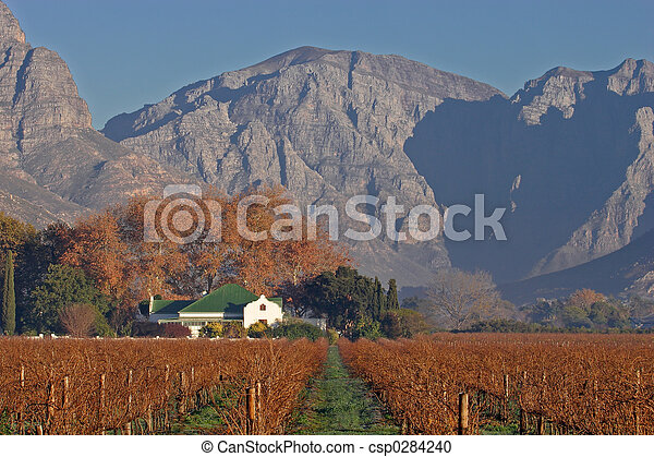 vinhedo, paisagem - csp0284240