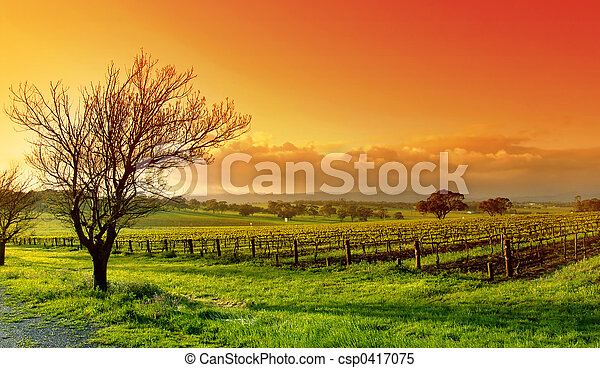 vinhedo, paisagem - csp0417075