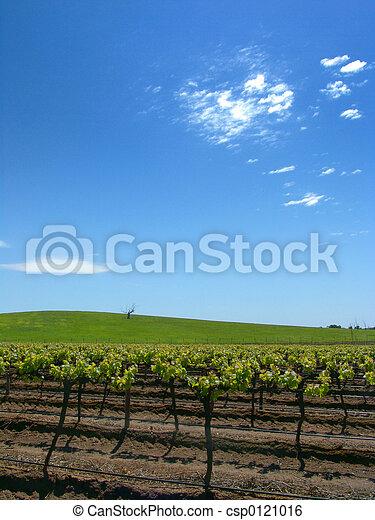 vinice - csp0121016
