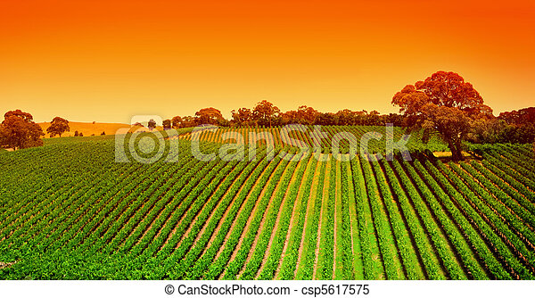 vinice, vyvýšenina, východ slunce - csp5617575
