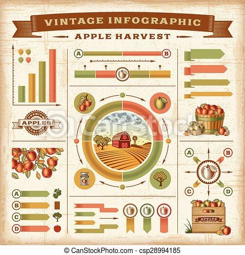 Vintage apple harvest infographic - csp28994185