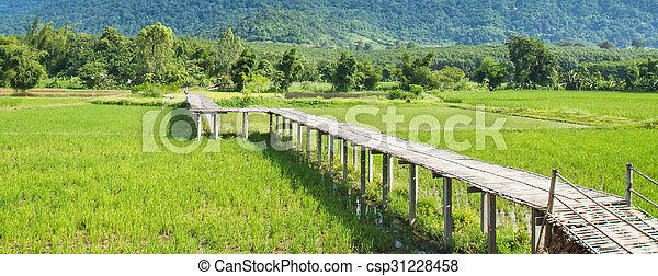 Vintage bamboo bridge on rice field. - csp31228458