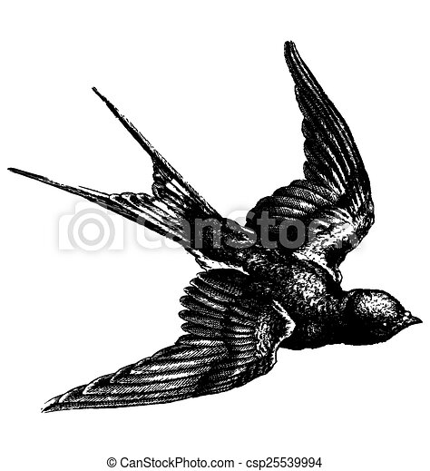 Vintage Bird Vector Hand Drawing Sketch Of A Flying