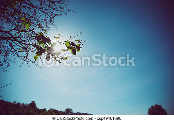 Vintage Blue Sky Scene With Green Leaves On Tree Faded Background