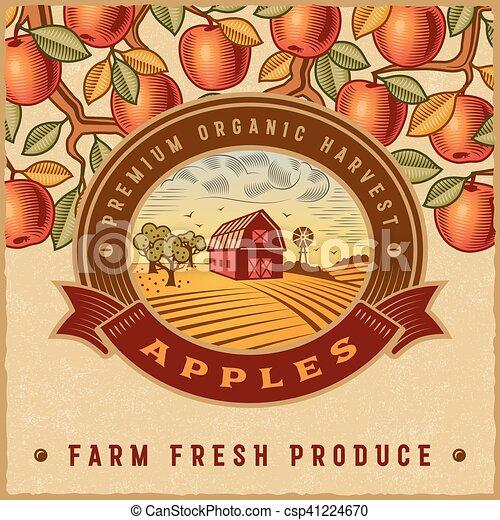 Vintage colorful apple harvest label - csp41224670