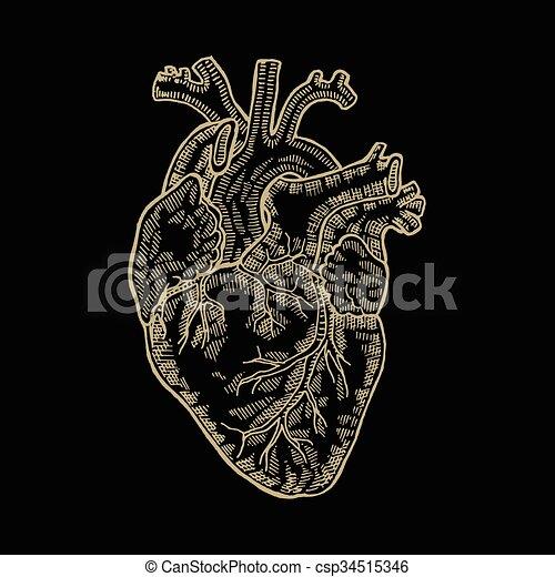 9225a5a65 Vintage engraved human heart. Vector illustartion. Design for t-shirt print  - csp34515346