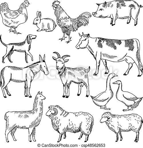 Vintage Farm Animals Farming Illustration In Hand Drawn Style