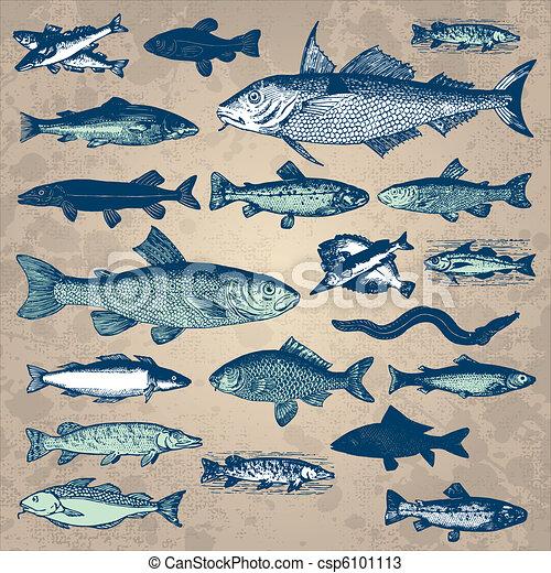 vintage fish set (vector) - csp6101113