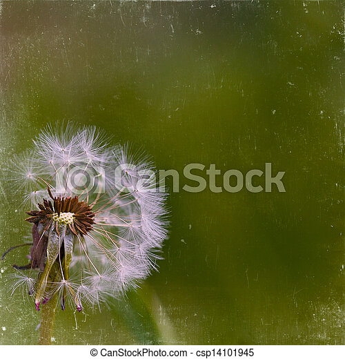 Vintage floral background dandelion on a green background old paper citizens, for any of your project - csp14101945