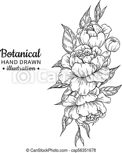 Vintage Flower Bouquet Vector Drawing Peony Rose Leaves And