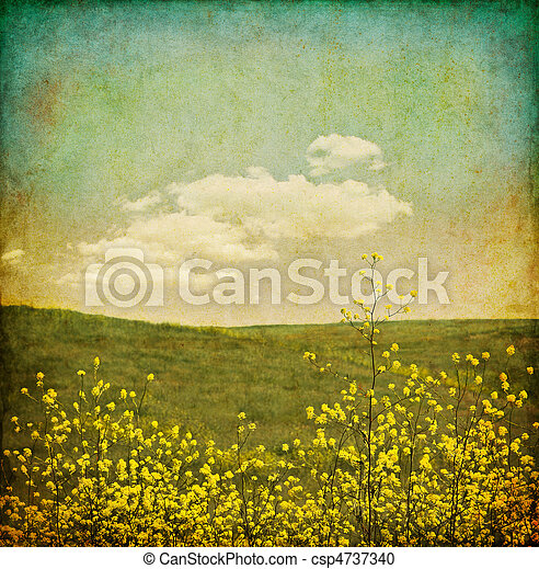 Vintage Flower Field A Of Black Mustard Plants With Stock