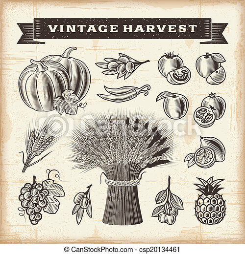 Vintage harvest set - csp20134461