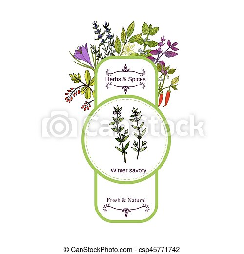 Vintage herbs and spices label collection. Winter savory - csp45771742