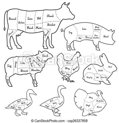 Diagram Of Animals