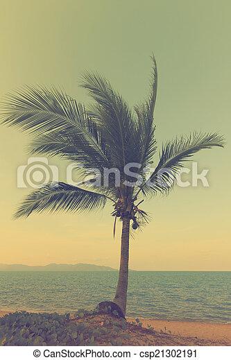 vintage  palm trees at beach sunset  - csp21302191
