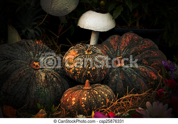 Vintage pumpkins and fruit - csp25876331