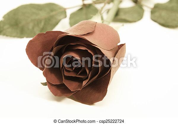 vintage rose on background - csp25222724