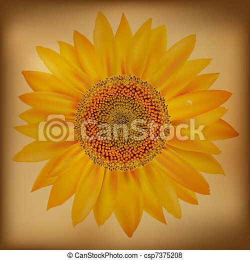 Vintage Sunflower Isolated On White Background Vector