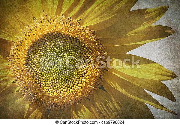 Vintage Sunflower Grunge Background