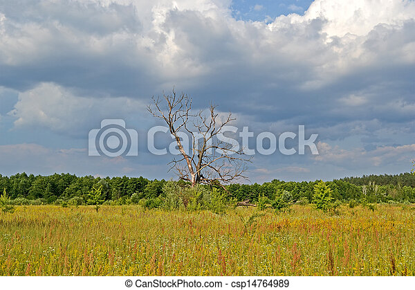vintage tree in the meadow before thunderstorm, blue sky with white clouds, travel details - csp14764989