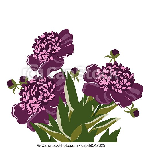 Vintage Watercolor Peony Flowers Vector Isolated On White Purple
