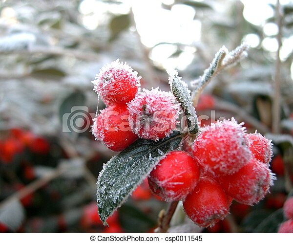 vinter, bär - csp0011545