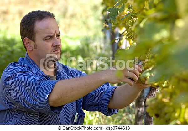 Vintner in the wineyard - csp9744618
