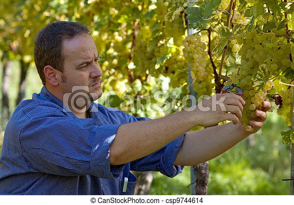 Vintner in the wineyard - csp9744614