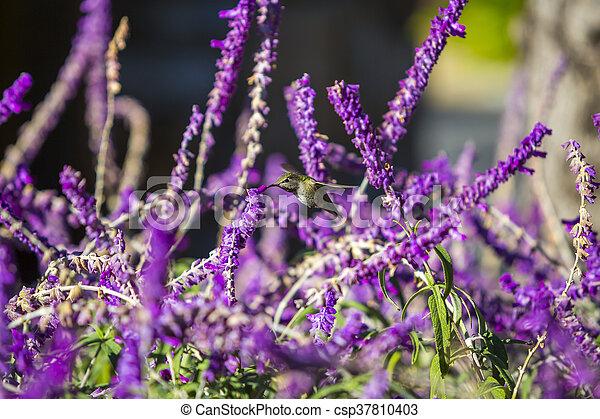 Viola Sopra Sfondo Verde Fiori Colibrì