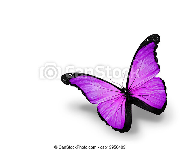 Violet butterfly, isolated on white background - csp13956403