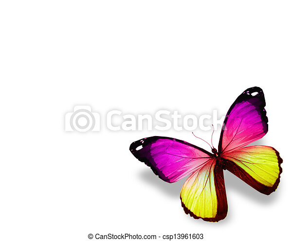 Violet butterfly , isolated on white background - csp13961603