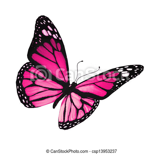 Violet butterfly, isolated on white background - csp13953237
