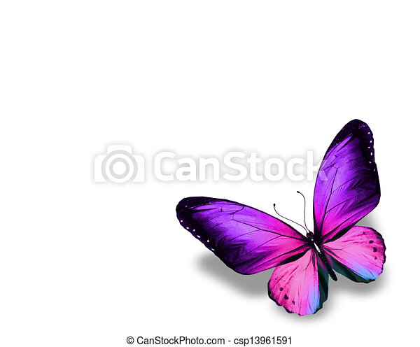Violet butterfly , isolated on white background - csp13961591