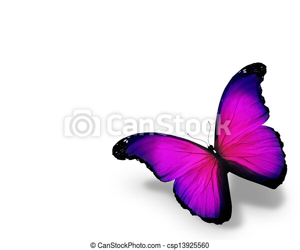 Violet butterfly, isolated on white background - csp13925560