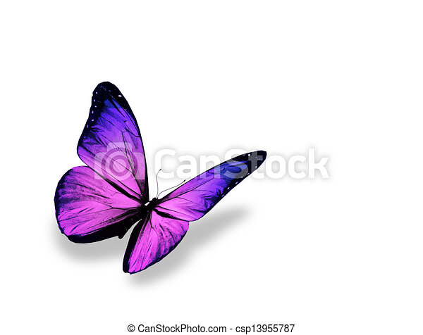 Violet butterfly , isolated on white background - csp13955787