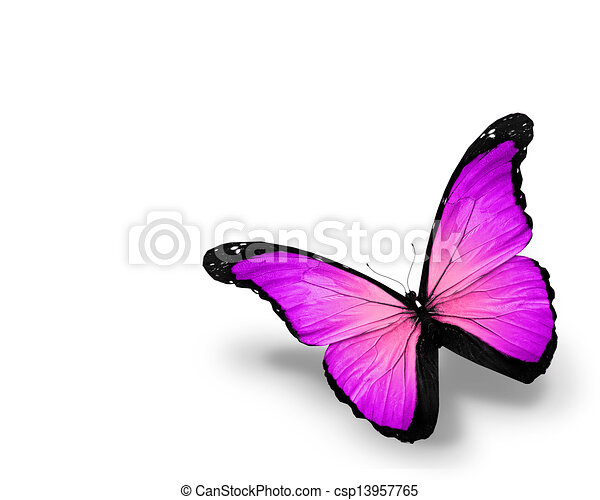 Violet butterfly, isolated on white background - csp13957765