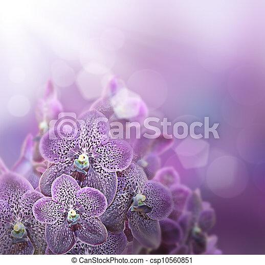 violet orchids - csp10560851
