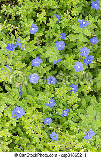 Violet small flowers - csp31865211