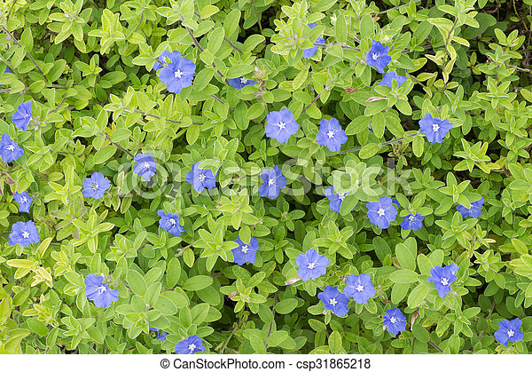 Violet small flowers - csp31865218