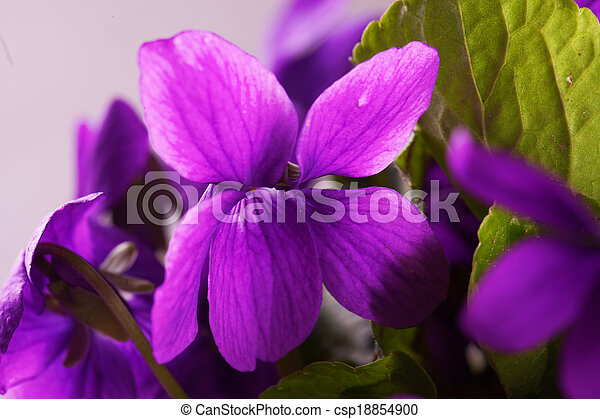 Violet - csp18854900
