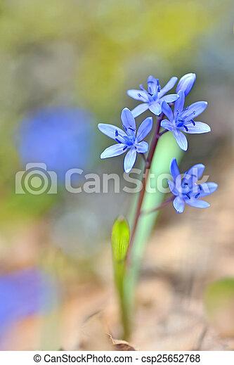 Flores de violetas - csp25652768