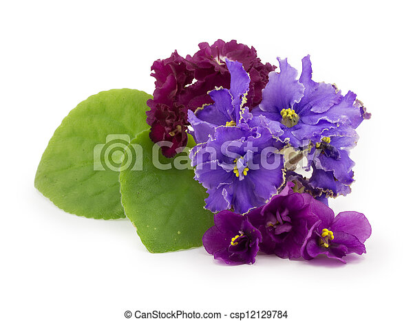 viooltje, bloem - csp12129784
