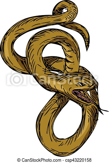 Curled Snake Stock Vector Images - Alamy
