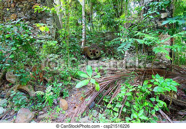 Virgin Islands Tropical Vegetation - csp21516226